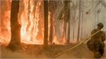 California wildfires: Ferguson Fire near Yosemite contained