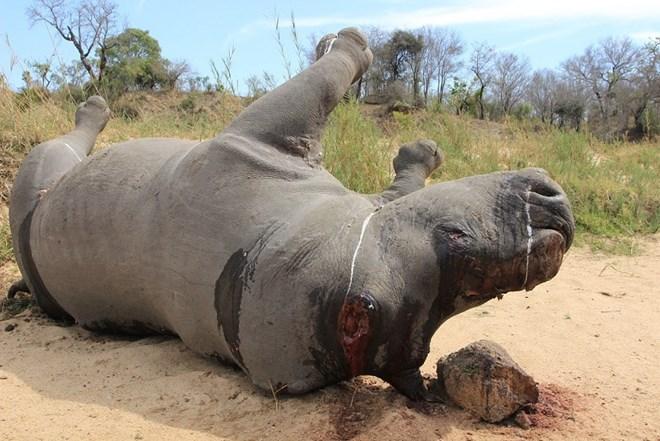 Short film calls for end to rhino massacres, Vietnam environment, climate change in Vietnam, Vietnam weather, Vietnam climate, pollution in Vietnam, environmental news, sci-tech news, vietnamnet bridge, english news, Vietnam news, news Vietnam, vietnamnet