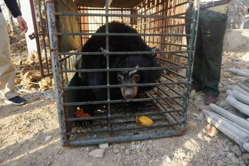 Last private bear bile farm in Tien Giang closed, Vietnam environment, climate change in Vietnam, Vietnam weather, Vietnam climate, pollution in Vietnam, environmental news, sci-tech news, vietnamnet bridge, english news, Vietnam news, news Vietnam, vietn