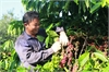 VN coffee industry feeling the heat from lower prices