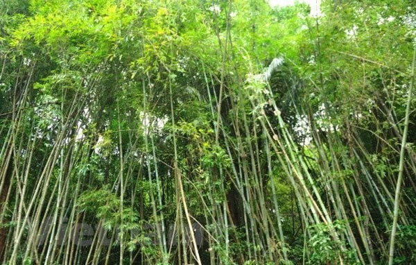 Binh Phuoc, Bu Gia Map National Park, deforestation, forest land invasion, Vietnam economy, Vietnamnet bridge, English news about Vietnam, Vietnam news, news about Vietnam, English news, Vietnamnet news, latest news on Vietnam, Vietnam