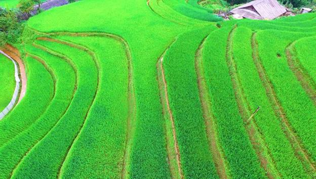 Fansipan in charming rice season, travel news, Vietnam guide, Vietnam airlines, Vietnam tour, tour Vietnam, Hanoi, ho chi minh city, Saigon, travelling to Vietnam, Vietnam travelling, Vietnam travel, vn news
