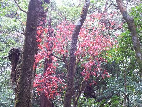 hoang lien son, sapa, national park, floral species