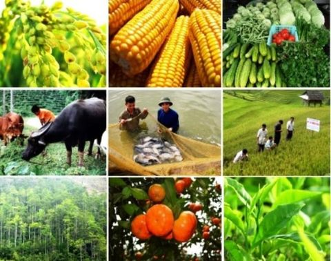 Image result for Agricultural Sector