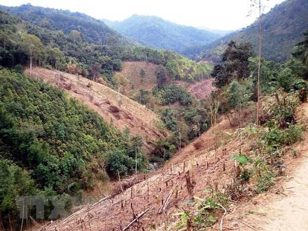 Dak Lak, forestry land, illegal deforestation, Vietnam economy, Vietnamnet bridge, English news about Vietnam, Vietnam news, news about Vietnam, English news, Vietnamnet news, latest news on Vietnam, Vietnam