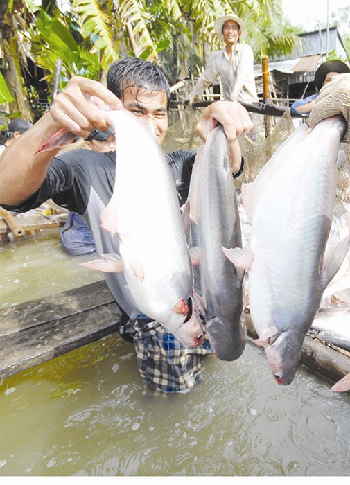 Vietnam sees great opportunities to boost catfish exports
