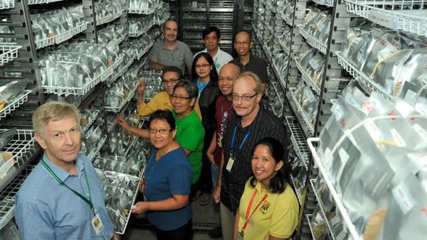 Rice 'safely conserved' in Philippines gene bank