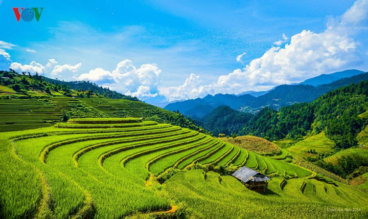 Amazing Mam xoi Hill in Mu Cang Chai