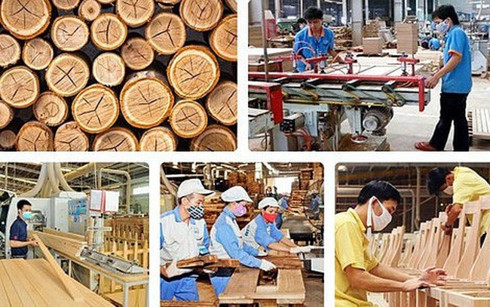 Timber companies in Vietnam: seizing the opportunity, vietnam economy, business news, vn news, vietnamnet bridge, english news, Vietnam news, news Vietnam, vietnamnet news, vn news, Vietnam net news, Vietnam latest news, Vietnam breaking news