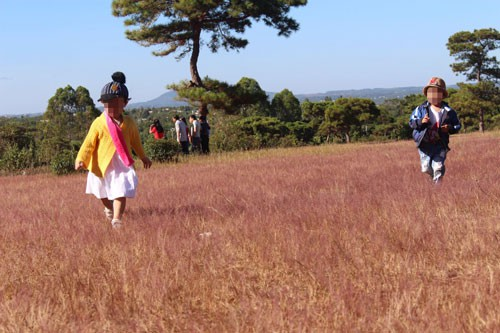 200 hectares forest land earmarked for golf course
