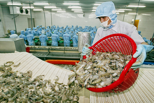 VN's shrimp exports at risk from antibiotic residues, vietnam economy, business news, vn news, vietnamnet bridge, english news, Vietnam news, news Vietnam, vietnamnet news, vn news, Vietnam net news, Vietnam latest news, Vietnam breaking news