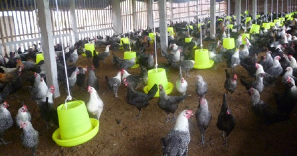 No new cases of H5N1 bird flu in humans reported since 2014
