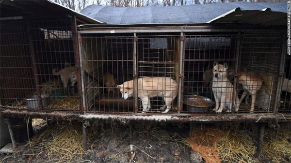 South Korea, dog meat trade, raising awareness of abandoned dogs and animal rights