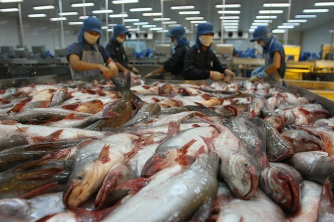 Vietnam could face tra fish oversupply, vietnam economy, business news, vn news, vietnamnet bridge, english news, Vietnam news, news Vietnam, vietnamnet news, vn news, Vietnam net news, Vietnam latest news, Vietnam breaking news
