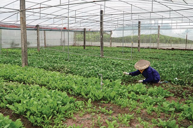 Popularity of organics catching attention, vietnam economy, business news, vn news, vietnamnet bridge, english news, Vietnam news, news Vietnam, vietnamnet news, vn news, Vietnam net news, Vietnam latest news, Vietnam breaking news