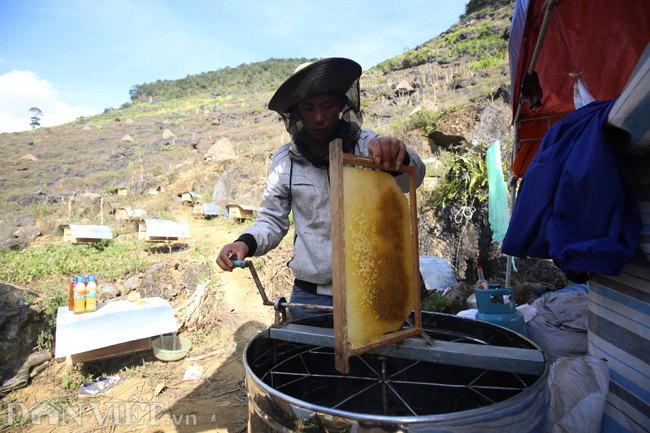 Ha Giang mountains offer perfect honey, social news, vietnamnet bridge, english news, Vietnam news, news Vietnam, vietnamnet news, Vietnam net news, Vietnam latest news, vn news, Vietnam breaking news