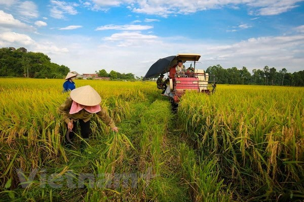 Crop cultivation sector targets 21 bln USD in export this year, vietnam economy, business news, vn news, vietnamnet bridge, english news, Vietnam news, news Vietnam, vietnamnet news, vn news, Vietnam net news, Vietnam latest news, Vietnam breaking news