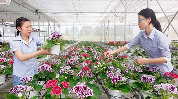 HCM City welcomes advanced technologies in agriculture