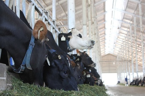 Local dairy industry will have to compete with foreign brands under CPTPP, vietnam economy, business news, vn news, vietnamnet bridge, english news, Vietnam news, news Vietnam, vietnamnet news, vn news, Vietnam net news, Vietnam latest news, Vietnam break