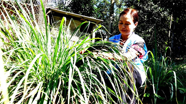 Gardeners see profits in 'green' produce