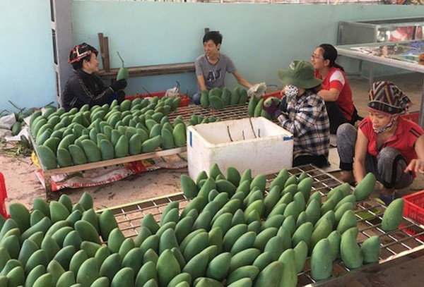 Vietnam's fruits cleared for export to US market - News