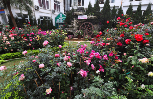 Hanoi to host Bulgaria Rose Festival 2019, entertainment events, entertainment news, entertainment activities, what's on, Vietnam culture, Vietnam tradition, vn news, Vietnam beauty, news Vietnam, Vietnam news, Vietnam net news, vietnamnet news, vietnamne