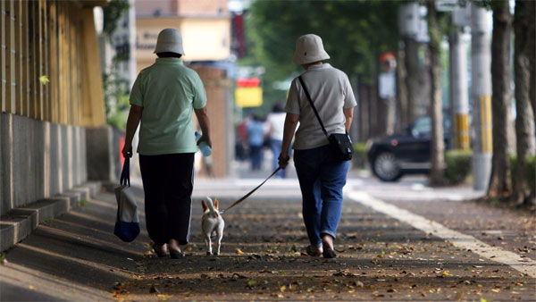Older patients, use dog walking as exercise, reduce the risk of injury