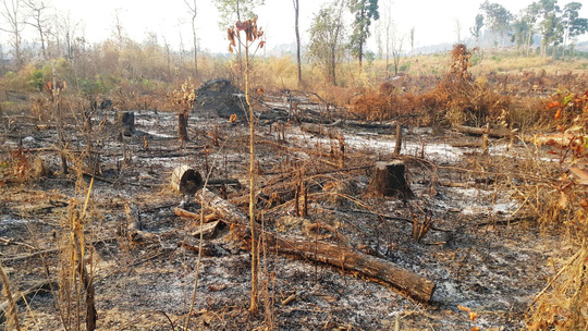 Central Highlands forest suffers deliberate fire, Vietnam environment, climate change in Vietnam, Vietnam weather, Vietnam climate, pollution in Vietnam, environmental news, sci-tech news, vietnamnet bridge, english news, Vietnam news, news Vietnam, vietn