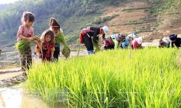 Policy dialogue discusses int'l standards on child labour, social news, vietnamnet bridge, english news, Vietnam news, news Vietnam, vietnamnet news, Vietnam net news, Vietnam latest news, vn news, Vietnam breaking news