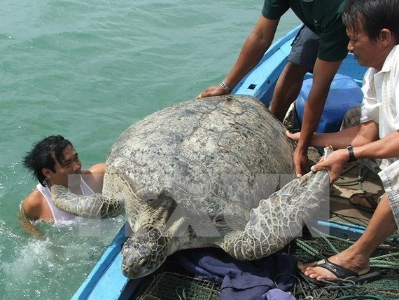 Con Dao National Park – nesting haven for sea turtles, Vietnam environment, climate change in Vietnam, Vietnam weather, Vietnam climate, pollution in Vietnam, environmental news, sci-tech news, vietnamnet bridge, english news, Vietnam news, news Vietnam,
