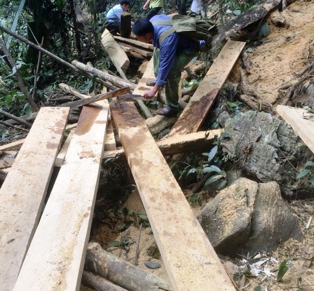 Valuable trees illegally cut down at Hoa Binh reserve, Vietnam environment, climate change in Vietnam, Vietnam weather, Vietnam climate, pollution in Vietnam, environmental news, sci-tech news, vietnamnet bridge, english news, Vietnam news, news Vietnam,