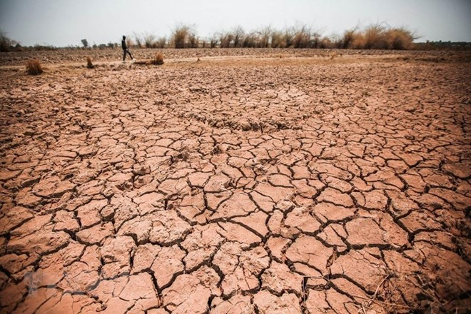 Central Highlands province struggles with prolonged drought, Vietnam environment, climate change in Vietnam, Vietnam weather, Vietnam climate, pollution in Vietnam, environmental news, sci-tech news, vietnamnet bridge, english news, Vietnam news, news Vie