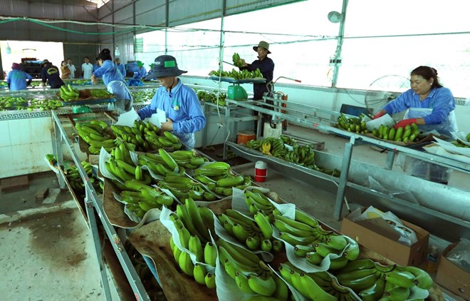 Vietnam, Netherlands agree to enhance agricultural partnership, Government news, Vietnam breaking news, politic news, vietnamnet bridge, english news, Vietnam news, news Vietnam, vietnamnet news, Vietnam net news, Vietnam latest news, vn news